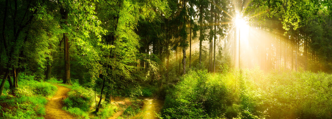 65958036 - forest path beside a stream, idyllic sunrise in forest